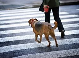 Pedestrian sensing technology