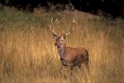 Insurance hitting deer